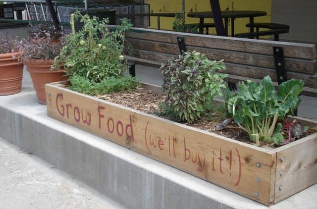 Wheatsville Co-op growing spaces